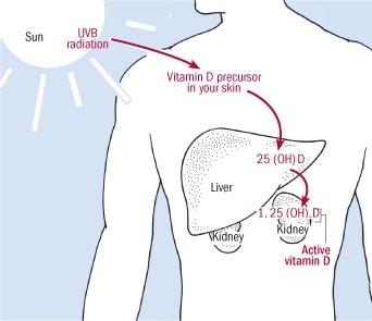Kako Tijelo Proizvodi Vitamin D