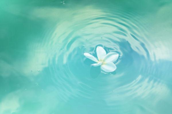 Urinarne Infekcije Upala Mjehura Flower Pexels Neosiam 580871